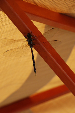 2012 09 18: Dragon Fly, Home